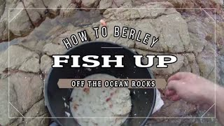 HOW to BERLEY UP fish off the OCEAN ROCKS