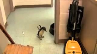 くすぐられて喜ぶ子ペンギンのテンションが異常wwww thumbnail