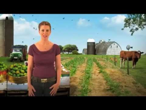 Genetically Modified Organisms and Foods ( GMO ) Explained