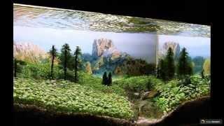 Оформление аквариума своими руками: 70 подводных чудес(http://happymodern.ru/kak-oformit-akvarium-svoimi-rukami-51-foto-sozdaem-podvodnoe-chudo/ Оформление аквариума своими руками (53 фото): создаем ..., 2015-06-04T12:59:40.000Z)