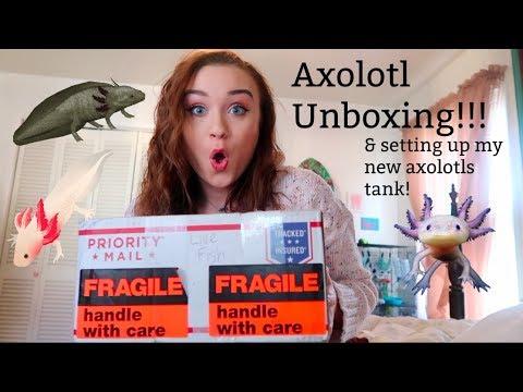 AXOLOTL UNBOXING & SETTING UP MY NEW PET AXOLOTLS TANK!! | ItsAnnaLouise