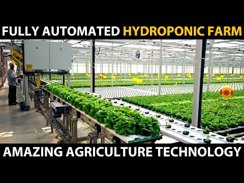 FULLY AUTOMATED HYDROPONIC FARM   Modern Hydroponic Farming   Amazing Agriculture Technology