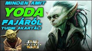 Yoda fajának bemutatása és minden ismert tagja! Kánon és Legenda | Star Wars Akadémia