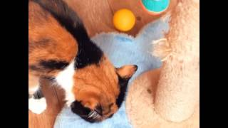 smart life hacks for cat owners