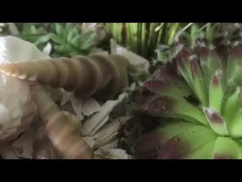 DIY:Wohn.- und Deko Idee, Pflanz-Körbchen sommerlich gestalten, Sukkulenten und Gras