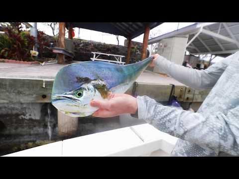 Billfishing - Hawaii Offshore.