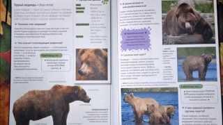 Леса умеренного пояса  - Бурый медведь
