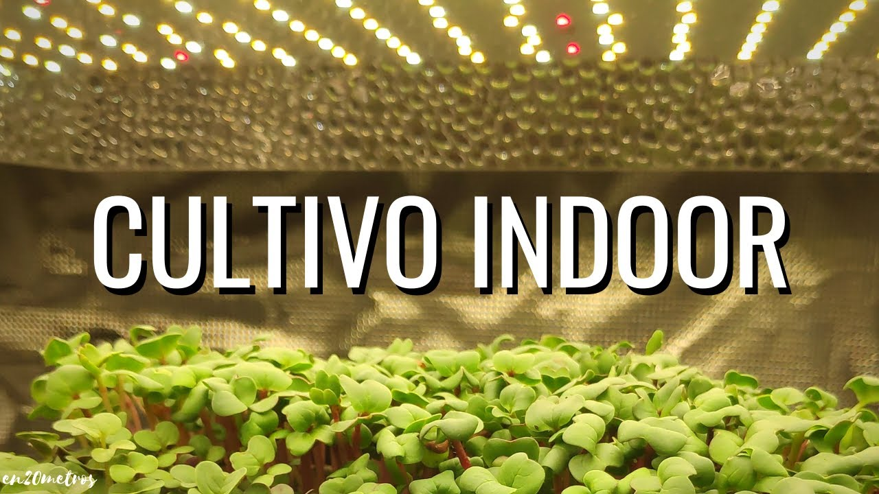 CULTIVO INDOOR LED: suculentas, lechugas y microgreens (CRECIMIENTO RÁPIDO) || en20metros
