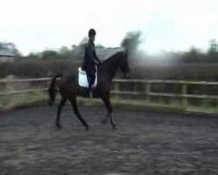 Eventer out of Colin Diamond Part3