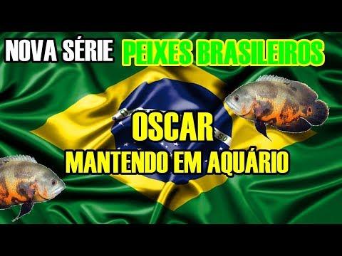 OSCAR - Peixes Brasileiros