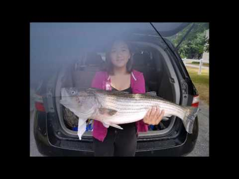 2016 striper fishing cape cod canal and ct