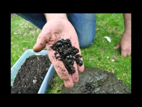 Build the dung beetles, build the soil - Talkin' Soil Health Conference 2015