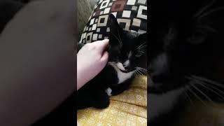 Bonded pair cat bath lol