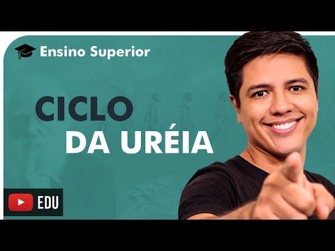OXIDAÇÃO DE AMINOÁCIDOS E CICLO DA URÉIA - ENSINO SUPERIOR - Prof. Kennedy Ramos