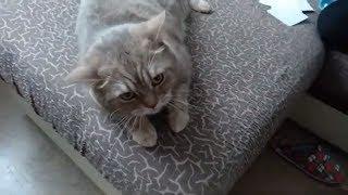 Толстый кот злодей - Самый злой кот в мире