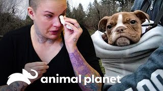 La despedida de Splat | Amanda al rescate | Animal Planet
