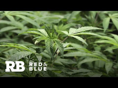 Bill that would decriminalize marijuana at federal level passes House vote