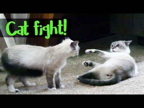Pip's Not Sick! | Reintroducing the Cats