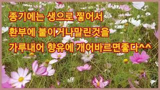"""#코스모스효능""""한방에선 뿌리를 제외한 잎&qu…"""