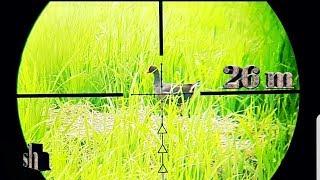 Berburu Burung Mandar Eps 19