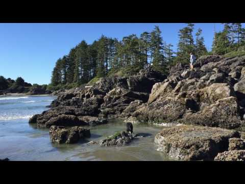 Things to do in Tofino with Kids