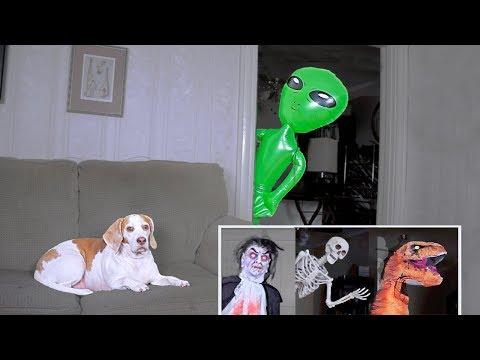 Funny Dog Gets Pranked Compilation: Funny Dog Maymo