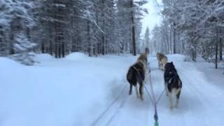 Husky ride in Saariselkä, Finland - 13 January 2016.