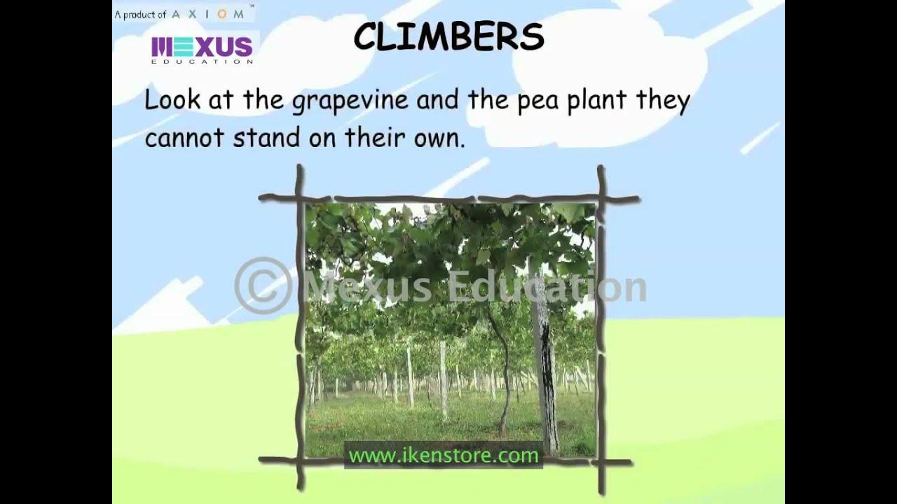 Kids Science - Types of Plants - YouTube [ 720 x 1280 Pixel ]