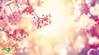 Download Relaxing Sleep Music: Soft Piano Music, Sleeping Music, Soothing Meditation Music, Yoga Music ★98 Mp3 and Videos