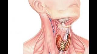 pulsinis spengimas ausyse svorio kritimas per daug malonu numesti svorio