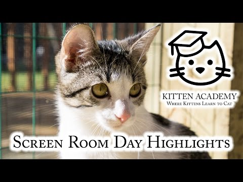 Screen Room Day Highlights