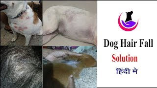 Dog Hair Fall Solution in Hindi II dogandvet II