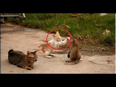 សង្គ្រាមឆ្មា_ Funny cats fighting
