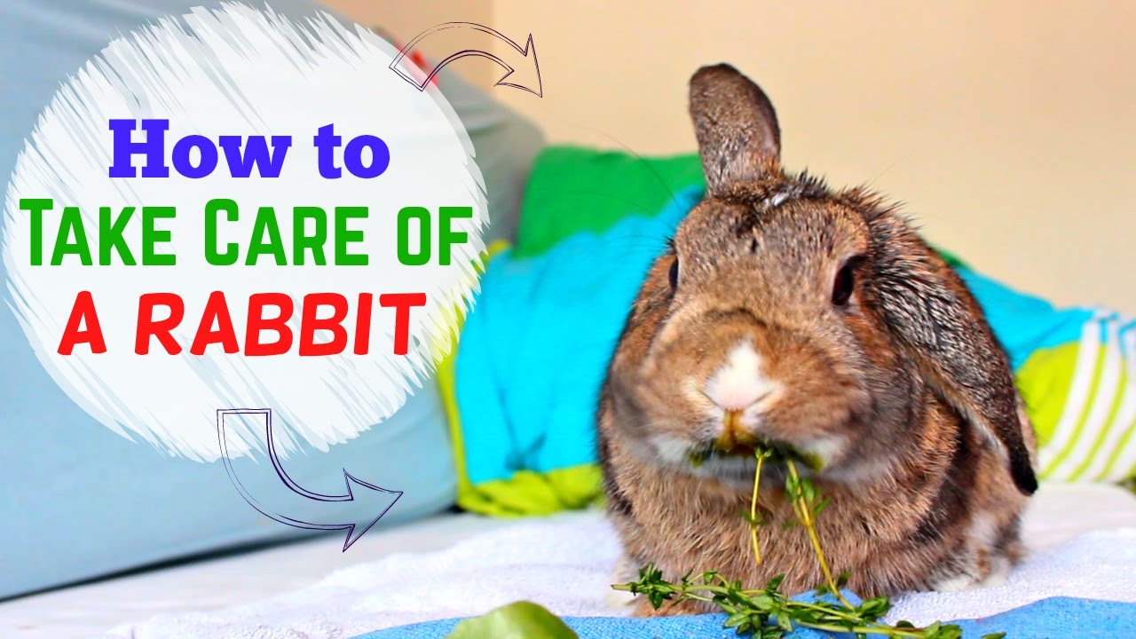 how to take care of a rabbit   youtube