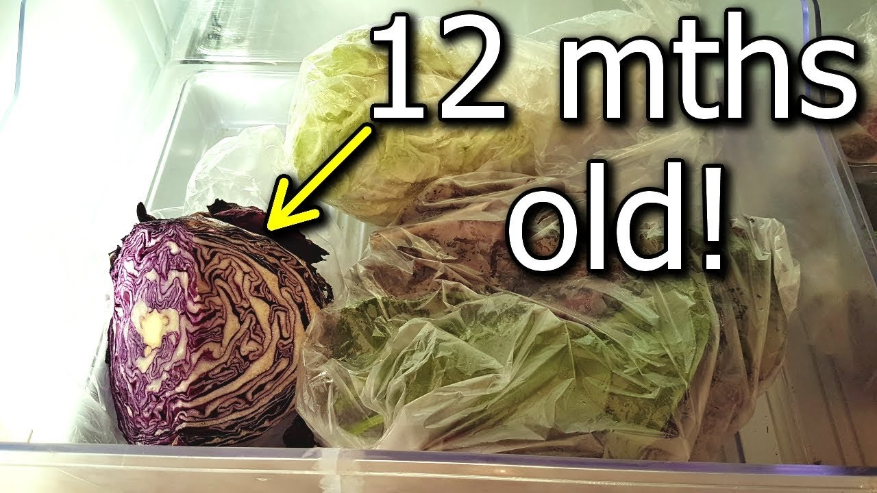 One Year Old Cabbage Stored in Crisper Home Grown Long Term Storage u0026 Organic & One Year Old Cabbage Stored in Crisper Home Grown Long Term Storage ...