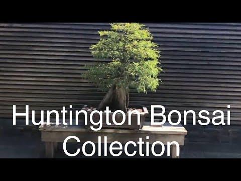 Huntington Library And Botanical Gardens - Bonsai Collections September 2019