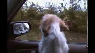 My dog jammin to Skynard!!