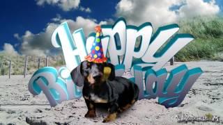 Happy Birthday - Dachshund [for Him]