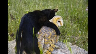 Owl's Unusually Close Friendship With A Cat Has Animal Researchers Scratching Their Heads