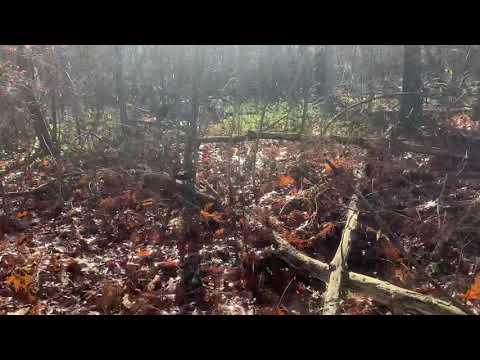 Pheasant Hunting In Pennsylvania