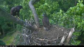aef dc eagle cam 08 june 2017 what goes up must come down