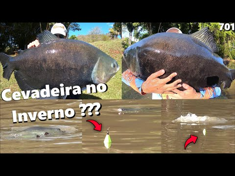 Você NUNCA viu uma pescaria de CEVADEIRA assim !!! Tambacus Gigantes na anteninha (Fishingtur #701)