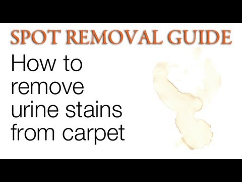 How to get Urine out of Carpet | Spot Removal Guide