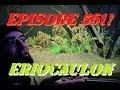 Episode 561! Aquascaping with Eriocaulon in 240 gallon Aquarium!