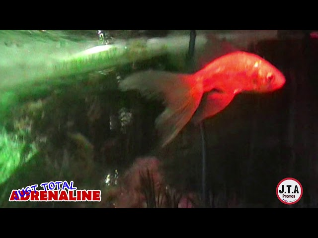 Fish Swimming - Short clip of Tropical Fish in our tank with relaxing music www.JTAPromos.net