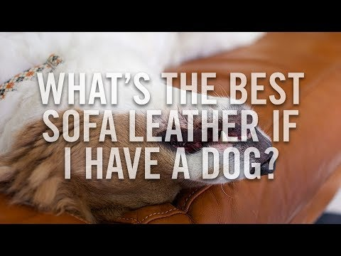 Best pet friendly leather sofas - Pet proof leather sofa - Pet-friendly couches - Roger and Chris