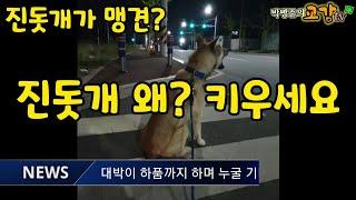 일본엔 하치이야기 한국엔 진돗개 대박이~