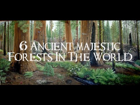 6 Ancient Forests In The World