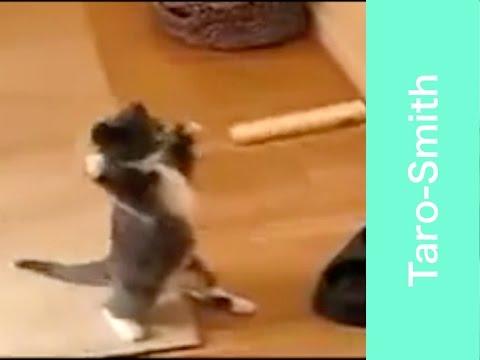 [HD] Cute Scared Cat Videos#1