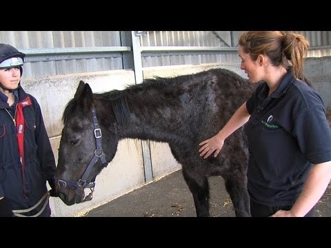 Emaciated rescue horses go from strength to strength